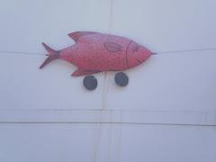 sardina,  símbolo de  fiesta