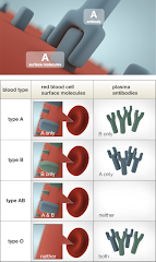 Blood Antibodies