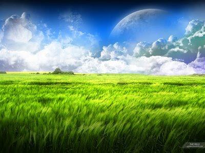 http://2.bp.blogspot.com/_3tYK5Jq7n_k/SEygP8yknHI/AAAAAAAAA6k/nuCJMYMgQCo/s400/field.jpg