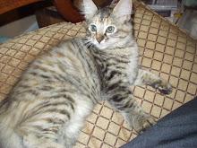 Carrie Kitty (Ci Ci Girl)