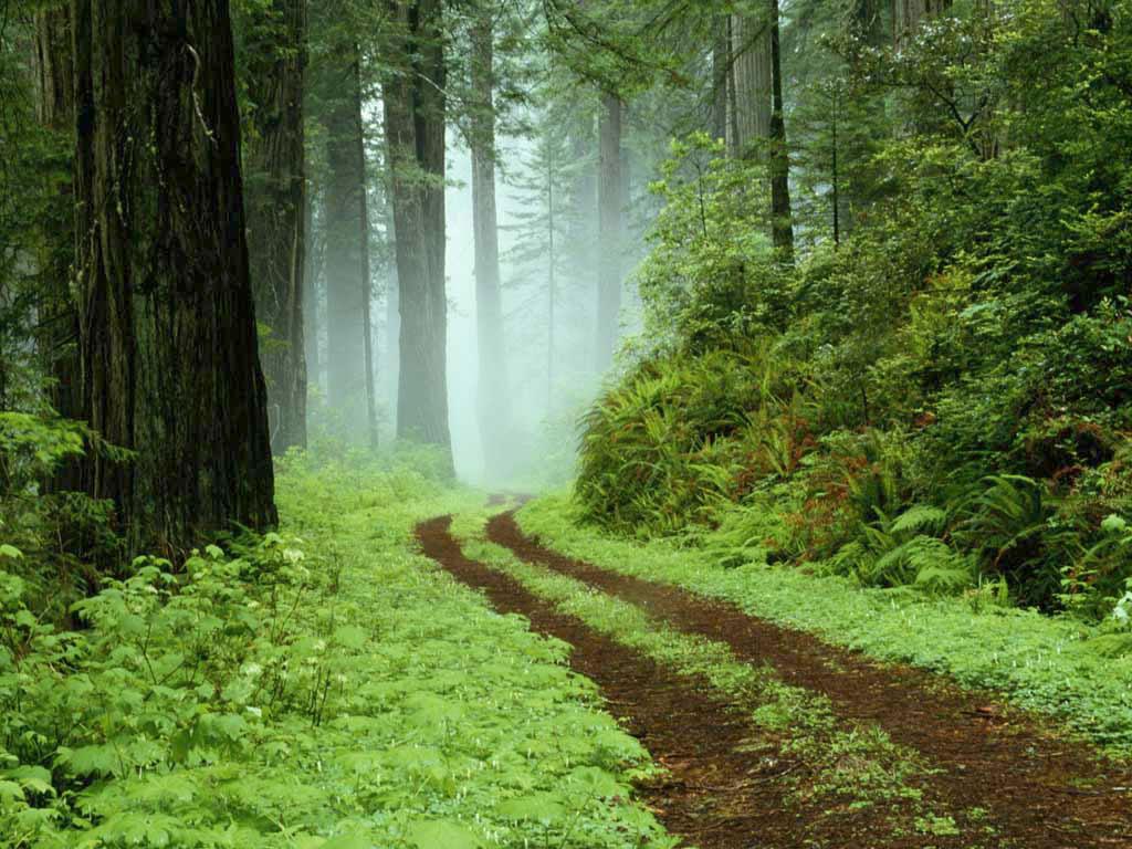 http://2.bp.blogspot.com/_3uPYuExnIY8/TPitSUXW8UI/AAAAAAAAAmo/aG5muAQtW6U/s1600/forest%2Bwallpaper21.jpg