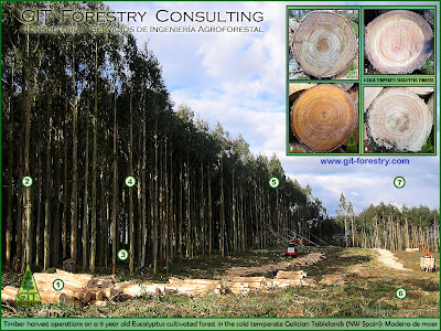Cold hardy Eucalyptus nitens plantation as source of information on silviculture, wood properties, tree genetics and stand dynamics / Plantacion de eucalipto nitens resistente a la helada como fuente de informacion sobre silvicultura, propiedades de la madera, genetica forestal y modelos de crecimiento/ GIT Forestry Consulting, Consultoría y Servicios de Ingeniería Agroforestal, Galicia, España, Spain / Eucalyptologics, information resources on Eucalyptus cultivation around the world / Eucalyptologics, recursos de informacion sobre el cultivo del eucalipto en el mundo