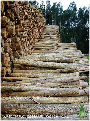 Eucalyptus globulus pulpwood in Galicia, Northwestern Spain / Madera pulpable de Eucalipto globulus en Galicia, Norte de España. GIT Forestry Consulting - Consultoría y Servicios de Ingeniería Agroforestal