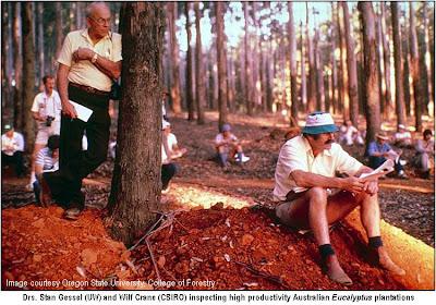 Stan Gessler, forester from Washington, among Australian Eucalyptus / Eucalyptus in Oregon, Washington and British Columbia / Eucalyptus in the Pacific Northwest / GIT Forestry Consulting, Consultoría y Servicios de Ingeniería Agroforestal, Galicia, Spain, España
