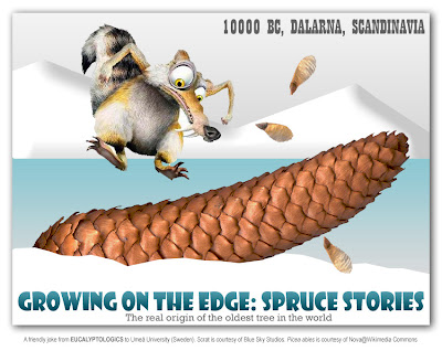 Ice Age, Blue Sky Studios, Scrat the Saber Toothed Squirrel / Origin of the 10000 year old Norway spruce Picea abies at Dalarna, Sweden, oldest Christmas Tree in the World by Leif Kullman at Umea University / Scrat, la ardilla de dientes de sable / El origen del Abeto de Noruega Picea abies de 10000 años de edad en Dalarna, Suecia, el Arbol de Navidad Mas Viejo del Mundo, por Leif Kullman, Universidad de Umea / GIT Forestry Consulting, Consultoría y Servicios de Ingeniería Agroforestal, Galicia, España, Spain / Eucalyptologics, information resources on Eucalyptus cultivation around the world / Eucalyptologics, recursos de informacion sobre el cultivo del eucalipto en el mundo