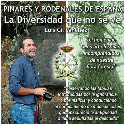 Pinares y Rodenales en España: La Diversidad que no se ve / Pine Woodlands in Spain: The Invisible Diversity / by Luis Gil Sanchez / Gustavo Iglesias Trabado / GIT Forestry Consulting, Lugo, Galicia, España, Spain / Eucalyptologics: Information Resources on Eucalyptus Cultivation Worldwide / Recursos de informacion sobre el cultivo del eucalipto en el mundo