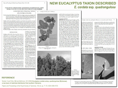 Dean Nicolle et al (2008) - Eucalyptus cordata ssp. quadrangulosa, new eucalypt taxon from Tasmania described / Eucalyptologics, Information resources on sustainable Eucalypt cultivation worldwide / Recursos de informacion sobre el cultivo sostenible del eucalipto en el mundo / GIT Forestry Consulting, Lugo, Galicia, España, Spain