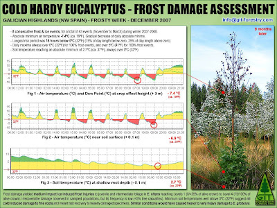 Cold hardy Eucalyptus nitens & Eucalyptus globulus frost damage assessment methodology by GIT / Método GIT para evaluacion de daños por helada a Eucalyptus nitens, Eucalyptus globulus y otras especies de eucalipto resistentes al frio / Gustavo Iglesias Trabado, GIT Forestry Consulting, Consultoria y Servicios de Ingenieria Agroforestal, Lugo, Galicia, España, Spain / Eucalyptologics, information resources on Eucalyptus cultivation around the world / Eucalyptologics, recursos de informacion sobre el cultivo del eucalipto en el mundo