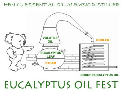 Eucalyptus Oil Distillation / Alembic for Eucalyptus essential oil distillation / Destilado de Aceite Esencial de Eucalipto / Uso de alambique para destilado de aceite de eucalipto / Koala Eucalyptuskwekerij / de Groene Prins Kwekerij// GIT Forestry Consulting SL / Gustavo Iglesias Trabado, Roberto Carballeira Tenreiro and Javier Folgueira Lozano / GIT Forestry Consulting SL, Consultoría y Servicios de Ingeniería Agroforestal, Lugo, Galicia, España, Spain / Eucalyptologics, information resources on Eucalyptus cultivation around the world / Eucalyptologics, recursos de informacion sobre el cultivo del eucalipto en el mundo