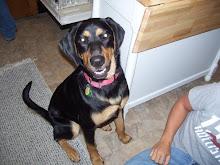 My Dog Toby!!