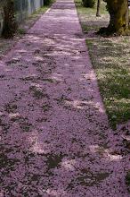 Sidewalk blossoms