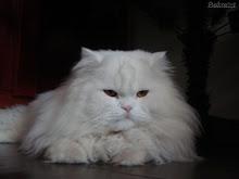 Sonhos a concretizar: ter um gato persa, uma Bimby e escrever um livro (ou acabar o já começado)