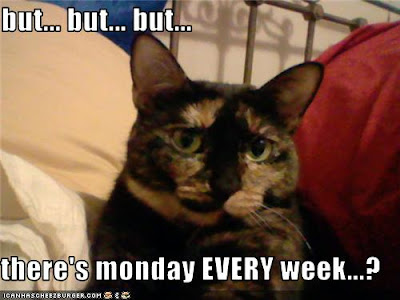 lol cat hate mondays 