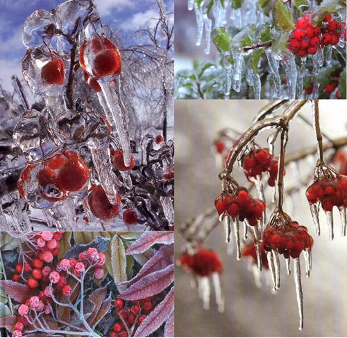 Bacche per il giardino d 39 inverno l 39 informazione di - Il giardino d inverno ...