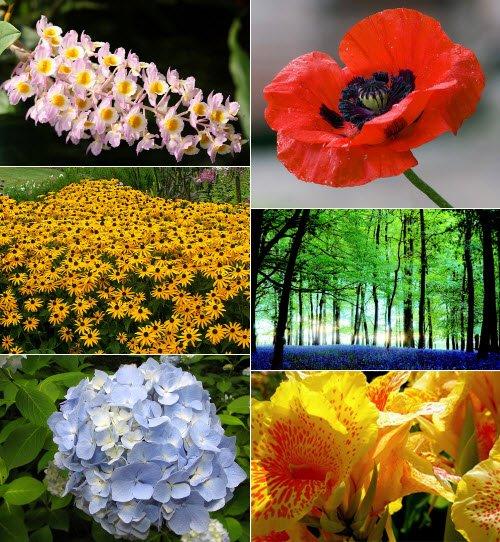 Las flores más lindas del mundo
