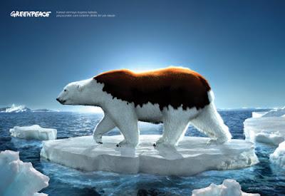 Oso polar o pardo?
