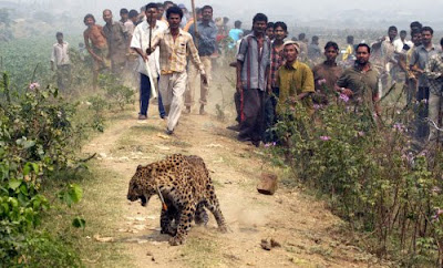 Multitud atacando a un Leopardo en la India