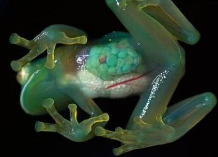 Los animales más extraños del mundo
