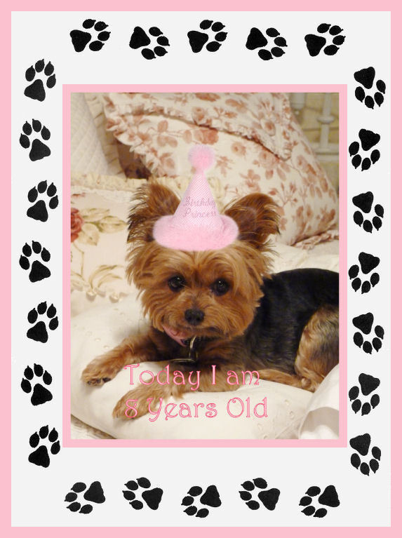 Happy Birthday Miss Mollie And Dog On It