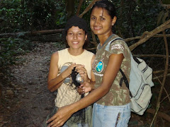 Pesquisa no Parque Florestal