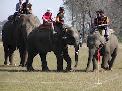 Elephant Polo Championships