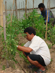 Farmers working in organic farm