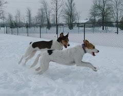 Snowy sisters