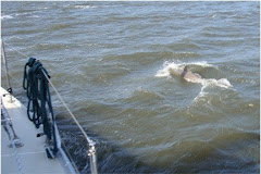 Another Dolphin Companion
