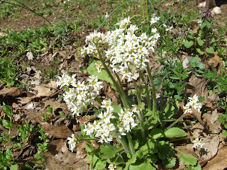 Wildflowers, Perimeter Trail, Woodberry Forest School