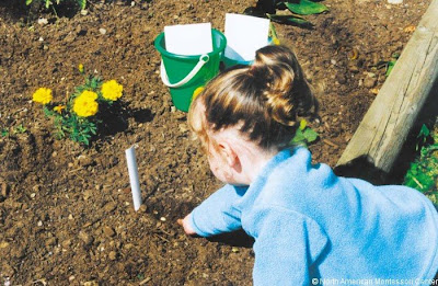 NAMC montessori classroom activities summer solstice girl gardening