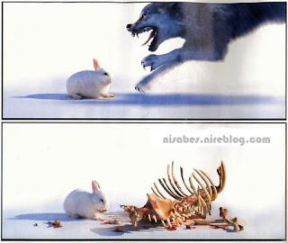 Conejo come al lobo