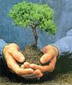 Plantemos un árbol nativo