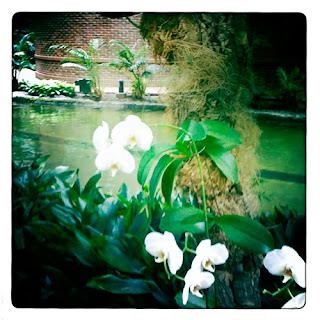 white orchids hipstamatic iPhone photography
