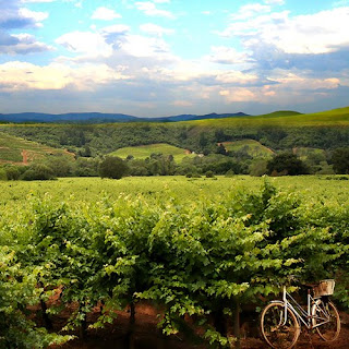 wine country, vineyards, bicycle, canvas wrapped giclee print