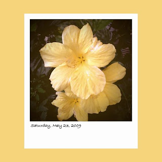 iPhone polaroid, yellow hibiscus