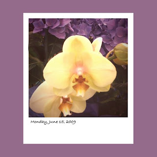 iPhone polaroid, orchids