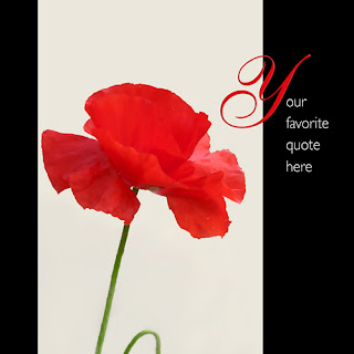 red, poppy, inspiration, canvas wrapped print