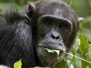 [simpanse.jpg]