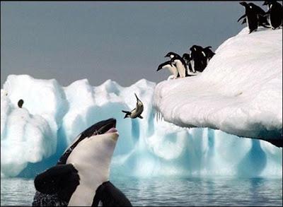 Pingüim Fail
