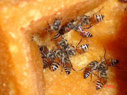 Bees on Jaggery