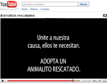 VIDEO: Animalitos Rescatados