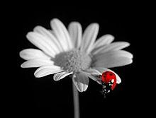 El único insecto...