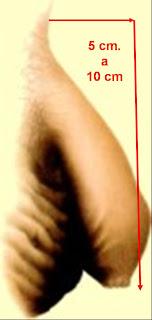 tamaño normal del pene flacido