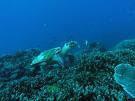 อุทยานแห่งชาติหมู่เกาะสิมิลัน(พังงา)