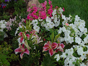 Stargazer Lilies, Petunias. Petrified Wood