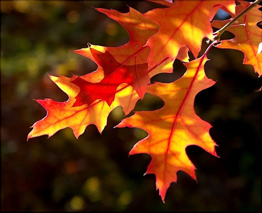 [leaves]