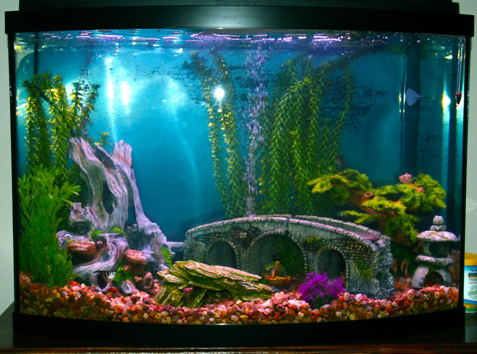 diagnosis alzheimer s a fish tank for the fisherman