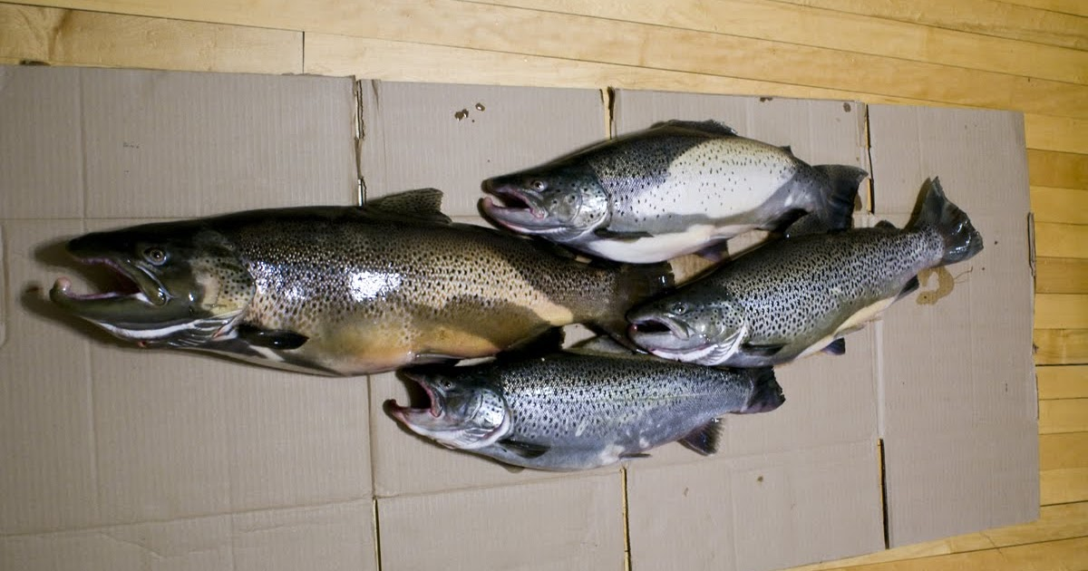 Great lakes angler wisconsin trout fishing report lake for Wisconsin trout fishing