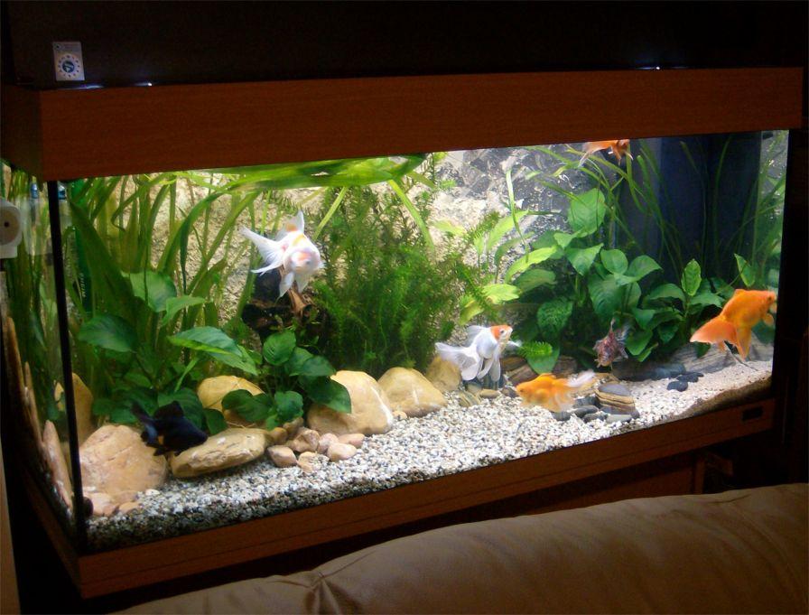 S c v aquascaping ideas creating a fancy goldfish setup for Idee deco aquarium