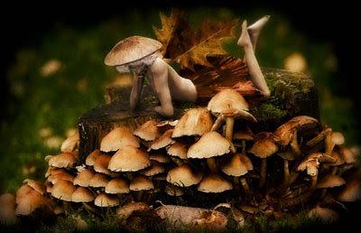 how to find hallucinogenic mushrooms